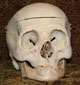 Human Skull